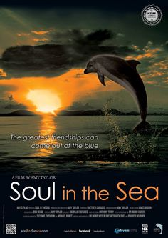 Amy Taylor's story of one woman's quest t befriend and protect an extroverted wild dolphin http://www.nziff.co.nz/auckland/film/bfec4f9e-fa93-4399-acaa-bc07d88a9f99