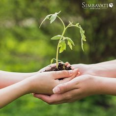Simbavati proudly started supporting the Matimu Day-Care in This year we founded a non-profit organisation Simbavati Community Development and Conservation Fund. Flamingo Party, Non Profit, Lodges, Conservation, Charity, Safari, Wildlife, Community, Instagram