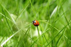 природа,трава,газон,фото,луг,лист