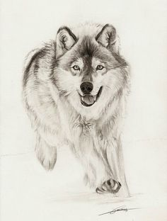 Running Wolf by ~AmBr0 on deviantART