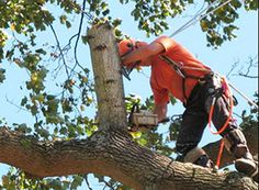 Golden Sun Landscaping's tree service Wheaton IL & tree service Glen Ellyn provides specialized tree care, trimming & stump removal services.
