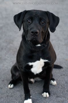 London Ontario Canada Pet Photographer   1105 Photography www.1105-photography.com