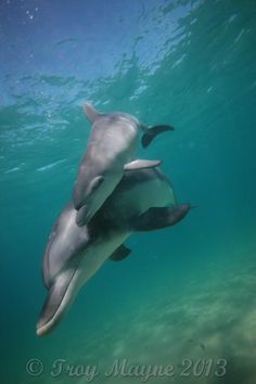 In order to get the perfect underwater photos, you will need a specialized equipment as well as the knowledge of such type of techniques. Underwater Photos, Underwater World, Dolphin Photos, Baby Dolphins, Bottlenose Dolphin, Wale, Water Life, Ocean Creatures, Beautiful Ocean