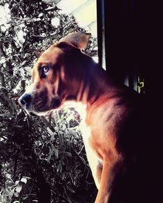 Elijah on the window