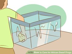 Image titled Care for African Dwarf Frogs Step 6 African Frogs, Dwarf Frogs, Frog Tank, Frog Terrarium, Small Frog, Beta Fish, Tanked Aquariums, Freshwater Aquarium, Pet Care