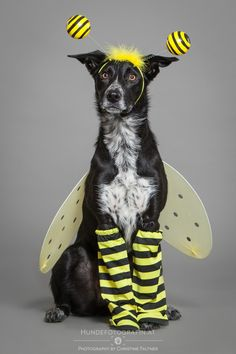 3c08a5e46258 32 Best Other Animals Dressed as Bees images