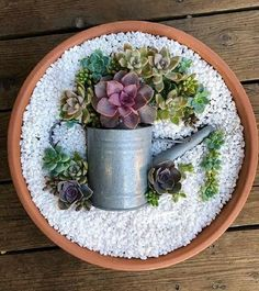 Deko-Trend: Kleiner bunter DIY-Sukkulenten-Blumentopf im Topf – Deco Trend: Small Colorful DIY Succulent Plant Pot in Pot – colorful Succulent Gardening, Garden Terrarium, Succulent Terrarium, Container Gardening, Organic Gardening, Succulent Ideas, Succulent Wall Gardens, Flower Gardening, Succulents In Containers