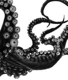 Octopus .....by Tierra Connor
