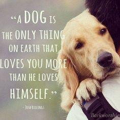 #dog #quote