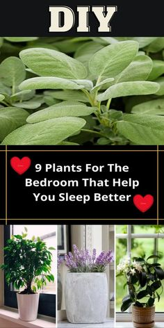 Diy Crafts Hacks, Home Crafts, Garden Projects, Diy Projects, Garden Ideas, Bedroom Plants, Plant Care, Container Gardening, Indoor Plants
