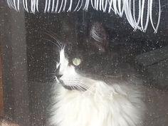 Drusilla cat