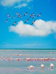 Fenicotteri rosa, Oristano. Spettacolo