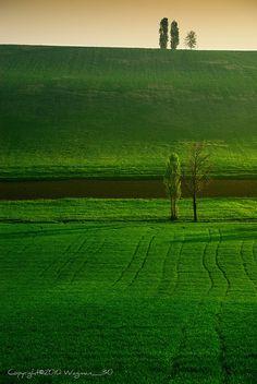 Monferrato Landscape, Northern Italy in Piemonte
