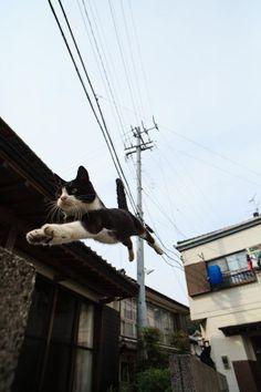 flying cat, no cape...