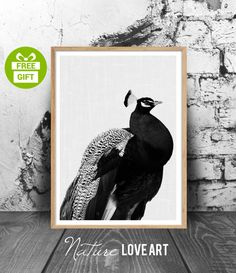 Photo de paon poster oiseau décoration moderne par NatureLoveArt