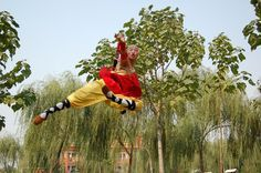 Shaolin Kung Fu Styles - Learn more about New Life Kung Fu at newlifekungfu.com - Learn more about New Life Kung Fu at newlifekungfu.com