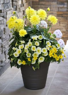 HGTV HOME Plants - Gorgeous Gold™ annuals mix has huge dahlia, geranium and petunia flowers and adds instant curb appeal to your home