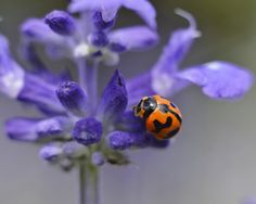 Ladybird Grooming by Tomislav Vucic on