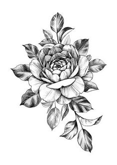 Picture of Hand drawn rose bunch with flower and leaves isolated on white background. Pencil drawing monochrome floral composition in vintage style. stock photo, images and stock photography. Floral Tattoo Design, Flower Tattoo Designs, Flower Tattoos, Leaf Tattoos, Rose Images, Flower Images, Flower Pictures, Flower Ideas, Tattoo Design Drawings