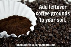 If you are looking for an easy way to acidify your soil to give acid-loving plants such as blueberries, azaleas and  rhododendrons a little boost this growing season, grab the coffee grounds.