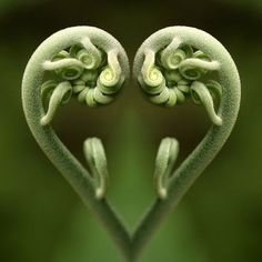 #love #corazón #heart #vegetal #naturaleza