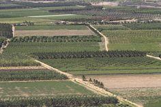 Plantações no Vale só foram possíveis graças ao sistema de irrigação das águas do Rio São Francisco. Região da cidade de Petrolina, Pernambuco. 13/11/2010. Foto: TIAGO QUEIROZ/AE