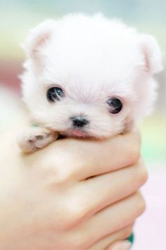 Tiny little puppy can't you believe how small it is it can fit in a hand!!!!