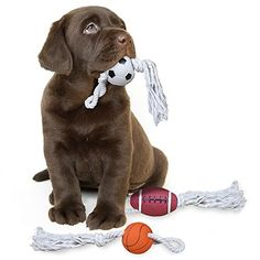 Dog Toys Squeaky Ball with Rope Best for Small Medium Sized Dogs Cool 3 Pack Interactive Vinly Set to Chew on Basketball Football Soccer Ball Play with Your Pet Today ! TDGoodTimes/PawTime http://www.amazon.com/dp/B00KUR5E8G/ref=cm_sw_r_pi_dp_0qY1vb171MD7T