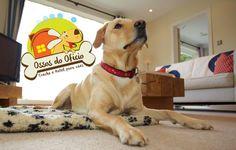 O feriado está chegando! Aproveite o feriado e dê um presente para seu cão. Na Ossos do Ofício, enquanto você viaja, cuidamos do seu melhor amigo com o cuidado e carinho que ele merece. Sem baias nem gaiolas. Seu cachorro monitorado 24 horas por dia. Rua: Doutor Lopes De Almeida, 68, Vila Mariana, Sao Paulo, SP, CEP 04120-070, BrasilTelefone: (11) 5579-2073; (11) 9 4197-7799; (11) 9 9993-5197