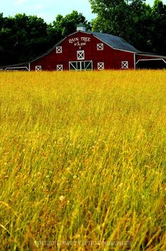 RAIN TREE FARMS. Classic red barn.