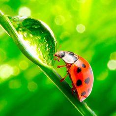 Ladybug #iPad #Wallpaper