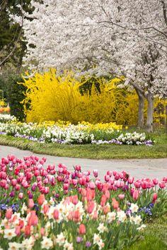Springtime at the Dallas Arboretum, Texas