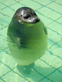 Big fat seal.
