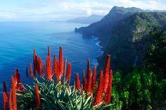 January in Madeira for you! Taken from Quinta do Furão, Santana, Madeira, Portugal