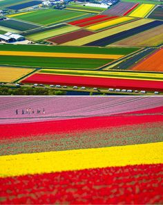 Where to travel in spring? One of the most beautiful places in the world is the Netherlands tulip fields in spring. Colorful blooming tulips become your brig. Places Around The World, Oh The Places You'll Go, Places To Travel, Travel Destinations, I Want To Travel, Parcs, Adventure Is Out There, Wonders Of The World, Amsterdam