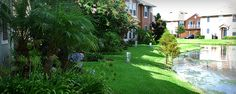 Bay Breeze Cove Backyard, Turf, tree services and irrigation