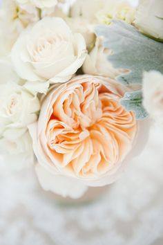 peach Juliet Garden rose - bouquet only because it's expensive Beautiful Juliet Garden Rose, Garden Roses, Juliet Roses, Roses David Austin, Floral Wedding, Wedding Flowers, Red Wedding, English Roses, Flower Power