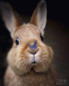 New Zealand Rabbits, Rabbit Life, Pet Puppy, Woodland Creatures, Cute Funny Animals, Wildlife Photography, Animals Beautiful, Beautiful Creatures, Pet Birds