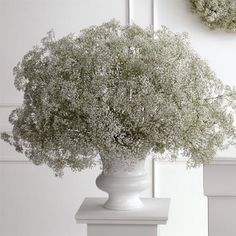 I love, love, love Baby's Breath (Gypsophila, for all you proper name buffs.)