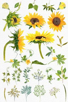 Sunflower Watercolor clipart SUNFLOWER CLIP ART Wedding clipart Floral clipart Separate flowers Diy wedding Greeting Cards Yellow flowers is part of Watercolor sunflower Sunflower Watercolor clipa - Watercolor Clipart, Art Clipart, Watercolor Flowers, Watercolor Paintings, Watercolor Wedding, Sunflower Watercolour, Watercolor Tattoo, Clip Art, Sunflower Drawing