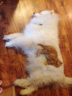 穏やかな時間を過ごす2匹!犬をベッドに眠る猫 26選   BUZZmag