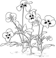 Viola Tricolor or Pansy Coloring Online | Super Coloring