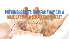 Tuna Bites Homemade Cat Treat Recipe for Sensitive Stomach - CatVills Tuna Cat Treat Recipe, Rare Animals, Animals And Pets, Salmon Cat, Flat Faced Cat, Cat Diet, Canned Cat Food, Cat With Blue Eyes, Cat Trees