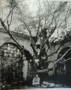 Coco Chanel's Villa Pausa on the French Riviera. Igor Stravinsky, Jean Cocteau, Pablo Picasso, Salvador Dali and Luchino Visconti all passed through this villa. That's Chanel in the tree. #MrBowerbird