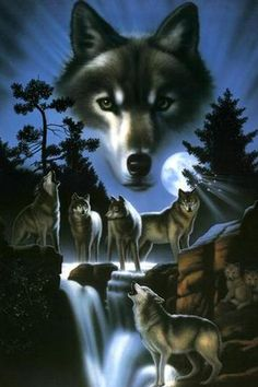 The howling of the wolves in nature.