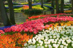 Keukenhof (Holanda): el jardín más bonito del mundo - 50 paisajes donde siempre debería ser primavera