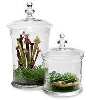 Vida a lo Verde*Living in Green*: Terrarios: plantas en botellas