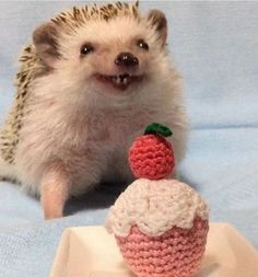 If you are looking for the perfect gift for someone who loves Hedgehogs...look no further! Check out our adorable Fuzzy Hedgehog Slippers! Cutest Animals On Earth, Cute Small Animals, Baby Animals Super Cute, Cute Funny Animals, Funny Dogs, Hedgehog Meme, Hedgehog Animal, Baby Hedgehog, Baby Animals Pictures