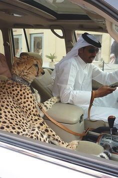 Dubai... this 'Big cat', my dream :)))