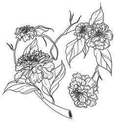 Carnation Tattoo, Line Work Tattoo, Illustrators On Instagram, Carnations, Flower Designs, Cherry Blossom, Tattoo Designs, Ink, Tattoos